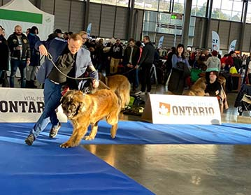 Andy Leon Eperies - XV. Brno National Dog Show